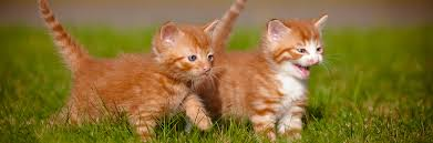 Image result for images: kittens