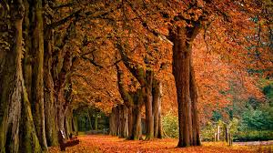 Autumn Wallpaper Hd - Autumn Desktop ...