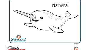 Small Picture Cute little narwhal This Pinterest