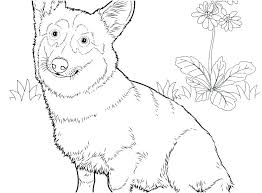 Dachshund Coloring Pages Gorgeous Dachshund Pictures To Color