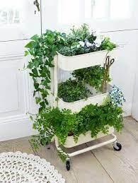 ikeaaaaa ikea plants plants indoor