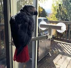 bird shower smokey on a multipurpose perch bird shower curtain asda