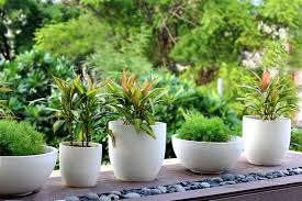 terrace garden 10 things you must know