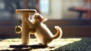 Reasons Why Cats Scratch The Carpet And How To Stop It
