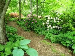 Small Picture 145 best Garden Delights Woodland Garden images on Pinterest