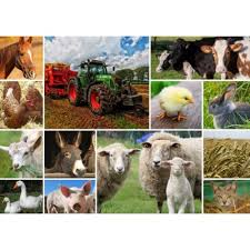 real farm animals collage. Delighful Animals Puzzle GrafikaT00142 Collage  Farmyard Animals With Real Farm A