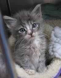 animal shelter kittens. Interesting Shelter Where To Adopt A Shelter Animal Throughout Kittens