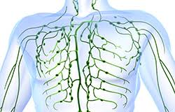 「リンパ管」の画像検索結果