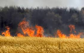 Image result for burning fields russia