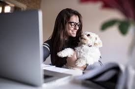 can employees really give managers crucial feedback out pet perks office pets improve productivity and teamwork