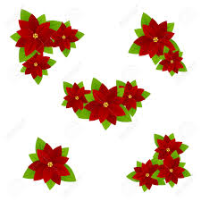 Set Of Flowers Poinsettia Symbol Of Christmas Isolated On A