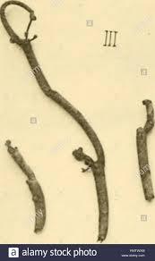 . Annales du <b>Muse colonial de Marseille</b>. Plants -- Madagascar ...