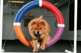 dog exercise equipment how it works and when to use it the dog people by rover