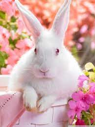 Mobile Hd Rabbit Wallpapers - Wallpaper ...