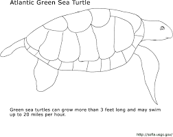 Small Picture SOFIA Kids Page Coloring Pages Green Sea Turtle