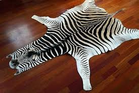 no felt trophy zebra skin rug uk non felted hide zebra skin rug