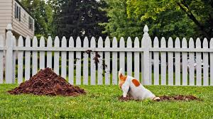 gardens keep how to stop dogs from digging in flower beds out of