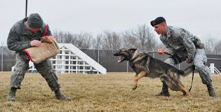 military working dogs train for success > whiteman air force base hi res photo details
