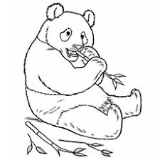 The panda bear top 25 free printable zoo coloring pages online on zoo coloring sheets