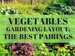 vegetable gardening layout the best