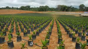 Resultado de imagen de Liberia