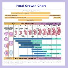 Prenatal Development Chart 44 Bright Fetal Development Diagram