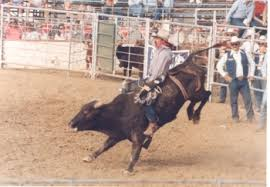 rodeo bulls animals. Simple Bulls Bulll Riding And Rodeo Bulls Animals Friends Of