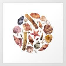 Seashell Collection Art Print By Benjaminflouw
