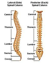 Coccydynia Pain Management In Fort Lauderdale Fl