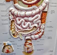 Magen darm krankheit morbus crohn