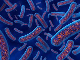 antibiotic resistance essay antibiotic resistance essay antimicrobial and antibiotic audio transcript and a number of useful resource links the
