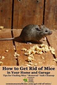 get rid of mice in your house and garage