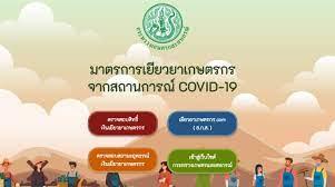 เช็กเงินเยียวยาเกษตรกรผ่าน www.moac.go.th คลิกเดียวรู้เลยวันไหนได้เงิน