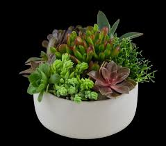 great office plants. Succulent Garden Best Office Plants - SnapSuites Boston Back Bay Executive Space Great
