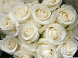 Roses Flowers Wallpapers White Rose Flower Wallpapers 4k Ultra Hd Wallpapers Flowers