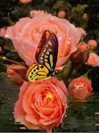 """Résultat de recherche d'images pour """"GIFS joli papillon sur une fleur"""""""