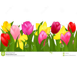 spring flowers border clipart. Modren Border Download Border Of Spring Tulips And Narcissuses Vector Stock   Illustration Of Park Throughout Flowers Clipart