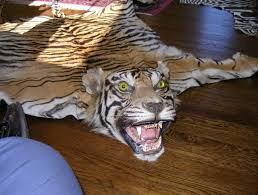 tiger skin rug with head for