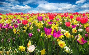 Free Spring Spring Awakening Free Photo On Pixabay