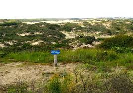 Word Of Nature Word Of The Day Duin Dune Welcome To The Direct Dutch Institute