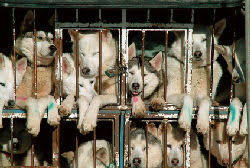 Image result for puppy mill conditions
