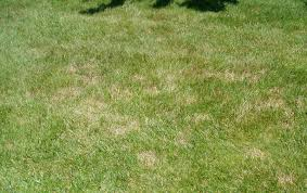 Brown Patch Disease Whatre Those Brown Patches In My Yard Securelawn Murfreesboro