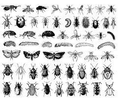 Insect coloring pages for children to print and color; Insects Insects 100 Mandalas Zen Anti Stress