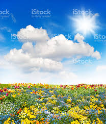 green grass blue sky flowers. Flower Meadow And Green Grass Field Over Cloudy Blue Sky Royalty-free Stock Photo Flowers O