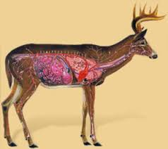 Deer Vitals Chart Blood Trailing Deer Tips That Will Optimize Your Recovery Rates