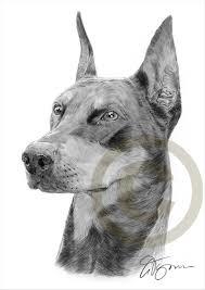 Hond Contourcute Vector Hond Kleurplaat Geïsoleerd Op Een Witte