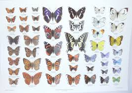 Moth Identification Chart Pop Up Butterfly Collection