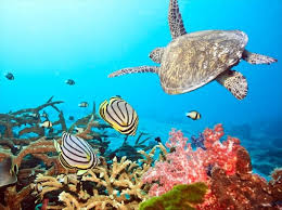 Image result for reef