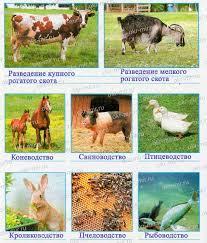 Животноводство в нашем крае Окр мир Плешаков Крючкова рабочая  Животноводство в нашем крае