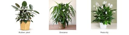 office plants no light. Best Office Plants For Reducing Pollutants No Light